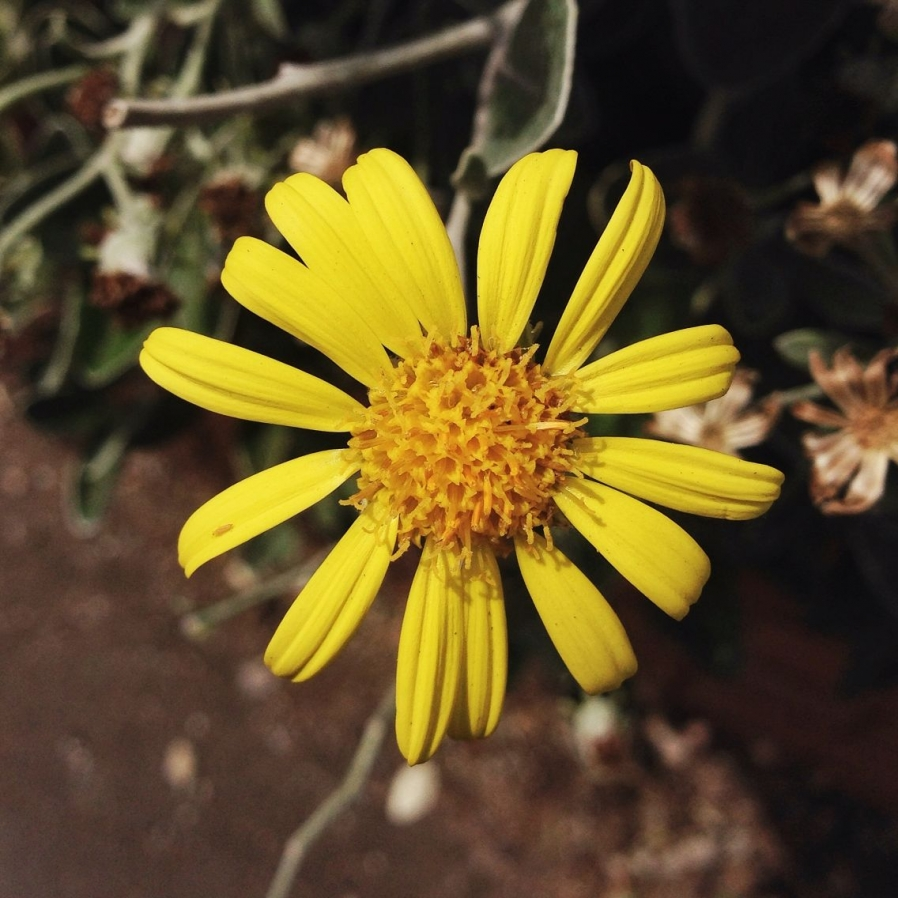 flower-photography_iphone-5__damian-brown-photography